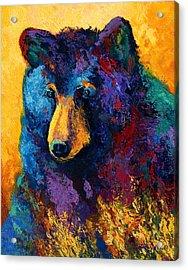 Bear Pause - Black Bear Acrylic Print by Marion Rose