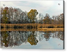 Bear Swamp Mirror Acrylic Print by Jennifer Nelson