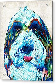 Bearded Collie Art - Dog Portrait By Sharon Cummings Acrylic Print by Sharon Cummings
