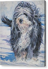 Bearded Collie In Snow Acrylic Print by Lee Ann Shepard