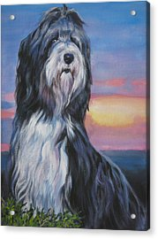 Bearded Collie Sunset Acrylic Print by Lee Ann Shepard
