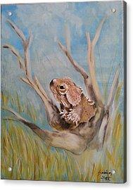 Bearded Dragon Acrylic Print by Judit Szalanczi