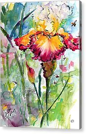 Bearded Iris And Bees Watercolor Acrylic Print