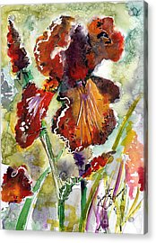 Bearded Iris Brown Sally Watercolor Acrylic Print