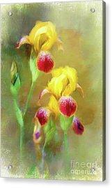 Bearded Iris Pair Acrylic Print