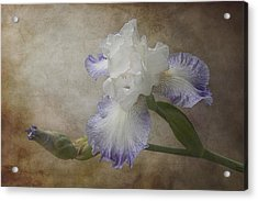 Acrylic Print featuring the photograph Bearded Iris 'gnuz Spread' by Patti Deters