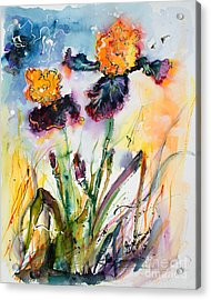 Bearded Irises Watercolor By Ginette Acrylic Print