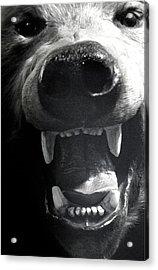 Beared Teeth Acrylic Print by Jez C Self