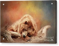 Bearly Asleep Acrylic Print