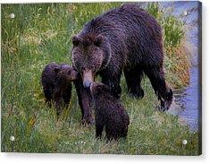 Bearly Wet Acrylic Print