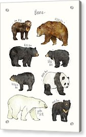 Bears Acrylic Print by Amy Hamilton