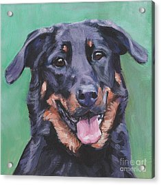 Acrylic Print featuring the painting Beauceron Portrait by Lee Ann Shepard