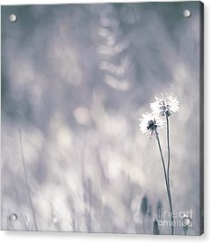 Acrylic Print featuring the photograph Beaute Des Champs - 0101 by Variance Collections