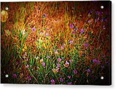 Beautiful And Wild Flowers Acrylic Print