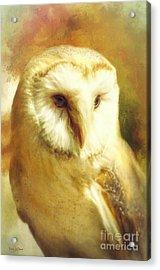 Beautiful Barn Owl Acrylic Print by Tina LeCour