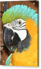 Acrylic Print featuring the photograph Beautiful Bird by Diane Merkle