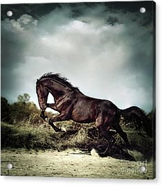 Beautiful Black Stallion Horse Running On The Stormy Sky Acrylic Print