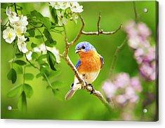 Beautiful Bluebird Acrylic Print by Christina Rollo