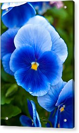 Beautiful Blues Acrylic Print
