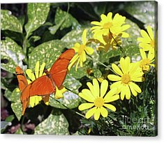 Beautiful Butterflies Acrylic Print