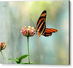 Beautiful Butterfly Acrylic Print by Laurel Powell
