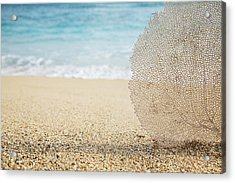 Beautiful Coral Element 1 Acrylic Print