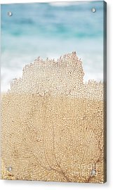 Beautiful Coral Element 2 Acrylic Print by Brandon Tabiolo - Printscapes