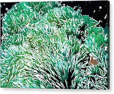 Beautiful Coral Reef 2 Acrylic Print by Lanjee Chee