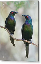 Beautiful Couple Acrylic Print by Jacqueline Hammer