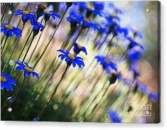 Beautiful Dancing Blue Flowers Romance Acrylic Print
