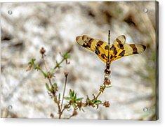 Beautiful Dragonfly Acrylic Print