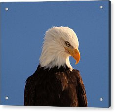 Acrylic Print featuring the photograph Beautiful Eagle by Jeff Swan