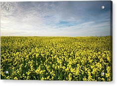 Acrylic Print featuring the photograph Beautiful Field With Yellow Flowers In Spring by Michalakis Ppalis