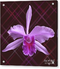Acrylic Print featuring the photograph Beautiful Floating Orchid by Donna Brown