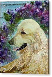 Acrylic Print featuring the painting Beautiful Golden by Claire Bull
