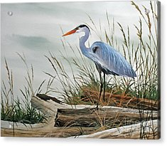 Beautiful Heron Shore Acrylic Print by James Williamson