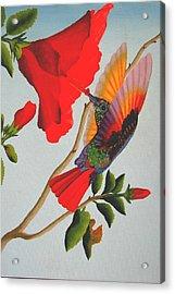 Beautiful Hummingbird Acrylic Print by Brian Leverton