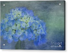 Beautiful In Blue Acrylic Print by Linda Blair