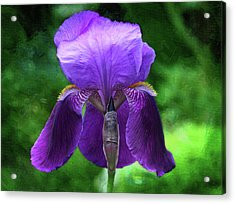 Beautiful Iris With Texture Acrylic Print