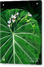 Beautiful Ivory Veins Of A Philodendron Acrylic Print by Sue Melvin