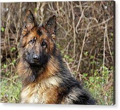 Acrylic Print featuring the photograph Beautiful Jessy by Sandy Keeton