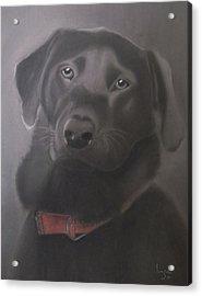 Beautiful Labrador Retriever Acrylic Print