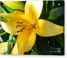 Beautiful Lily I Acrylic Print