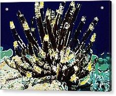 Beautiful Marine Plants 10 Acrylic Print by Lanjee Chee