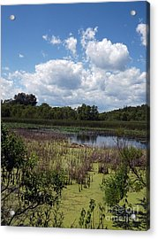 Beautiful Marsh View Acrylic Print