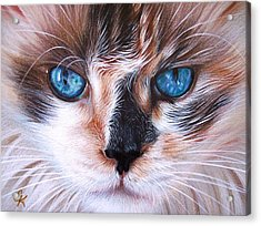 Beautiful Mia Acrylic Print by Elena Kolotusha