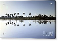 Beautiful Nature In Morning - Egypt. Acrylic Print by Mohamed Elkhamisy