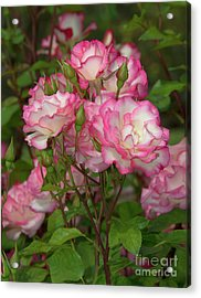 Beautiful Nicole Roses Lighter Acrylic Print