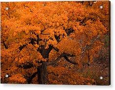 Beautiful Orange Tree On A Fall Day Acrylic Print by Joni Eskridge
