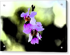 Beautiful Orchid Acrylic Print by Nanette Hert